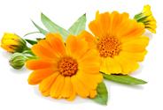 fragrance-bloom